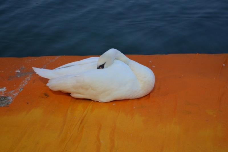 gualtiero viola-ponte floating piers (19)