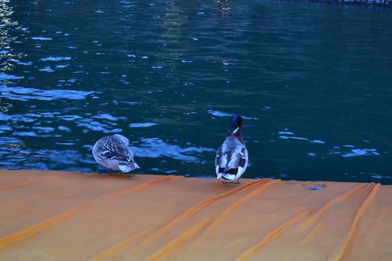 gualtiero viola-ponte floating piers (22)