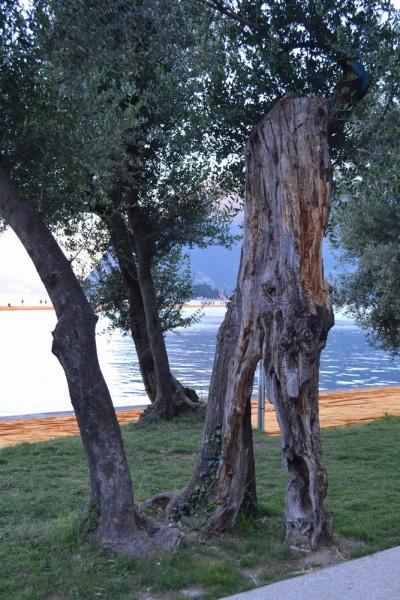 gualtiero viola-ponte floating piers (59)
